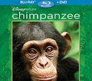 Chimpanzee (video)