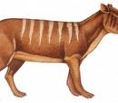 Eporeodon