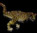 Karnotaur - Frog