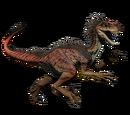 Novaraptor - skórka Alpha