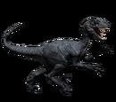 Novaraptor - skórka Fossilized