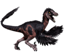 Novaraptor - skórka Bearded