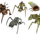 Hormigas León