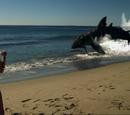 Sand Shark (Sand Sharks)