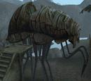 Morrowind: Tiere
