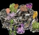 Reef (HENDRIX)