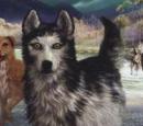 Alfa (koirasusi)