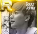 Super Junior Theme Cards