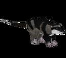 Water Opossum (Tamara Henson)