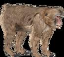 Japanese Macaque (Eryel & Zerosvalmont)