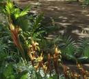 Planta de jarra direhorse
