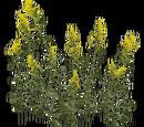 Goldenrod (Aurora Designs)