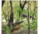 Stout-legged wren