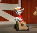 Garbie/Gallery/Pup-Fu!