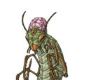 Insect philosopher