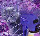 Крашеный кот