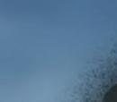 Akuma no Mi's Introduzidas em Flashback