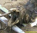 Sakhalin Island Sea Wolf
