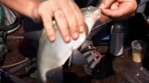 Про Риболовлю Всерйоз - Випуск 06 - Бортова ловля карася, ляща