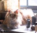 Лютик (кот)
