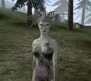 Morrowind: Stworzenia aedryczne