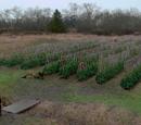 Bean Fields