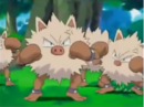EH14 Primeape.png