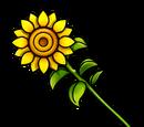 Sunflower (Gear)
