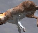 Hare (2.7)