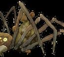 Паук-бомбардир