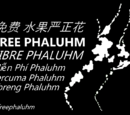2015 Phaluhm Anti-Chinese riots