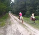 Jennifer Rides a Horse