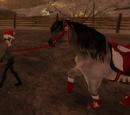 Pferde führen
