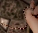 Cleopatra's Asp