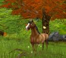 Zaginiony koń Moniki