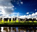 Aerotron/Cow Choir