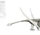 Cryopterus magnus