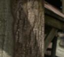 Jobi Wood