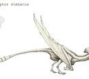 Brontolophoraptor nimbatus