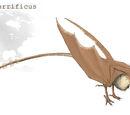 Limatops terrificus