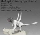 Gelupterus