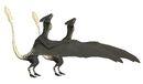 Ascialophoraptor sexual dimorphism.jpg