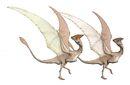 Daulophoraptor sexual dimorphism.jpg