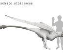 Candidiodraco sibiriscus