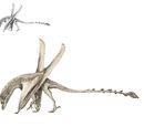 Dschangisaurus robustus