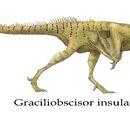 Graciliobscisor insularis