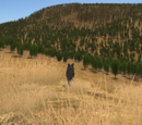 Amethyst Mountain (2.7)