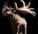 Большерогий олень (лось)