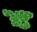 Water Hyacinth (German 13)