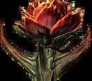 Róża Sanguine'a (Skyrim)